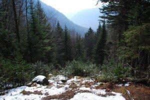 Première neige dans Hiver DSC_8424-300x200